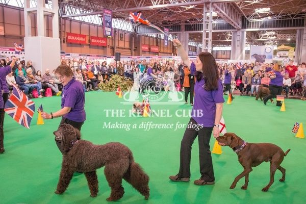 The Heelwork to Music display in the Dog Activities Ring during Day 2 of Crufts 2016