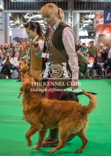 Philippa Williams and ger Gundog display team in the Dog Activities Ring on Day 2 of Crufts 2016