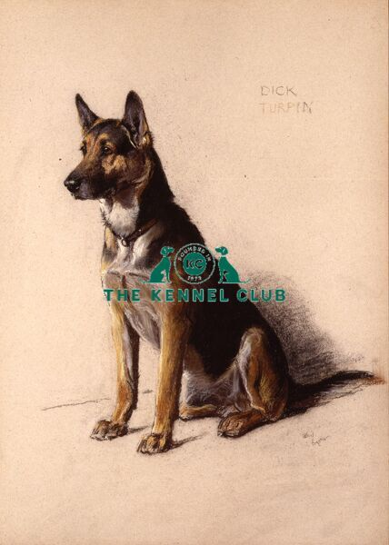 Pastel 22 x 30 ins, signed Aldin painted this picture for a groom to give to his bride as a wedding present, the German Shepherd Dog Dick Turpin, being her pet