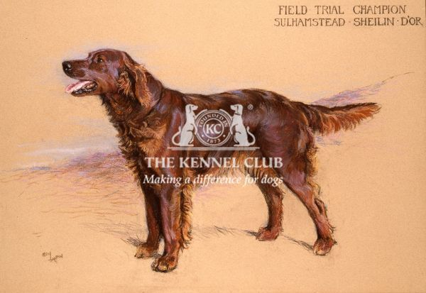 Pastel 27.5 x 38.5 ins, signed  Mrs Florence Nagle, owned the two Irish Setters Valla D'Or and Sheilin D'Or. Mrs Nagle was a great friend of Aldin, the friendship being formed through Mrs Nagle's friendship at finishing school in Paris with Aldin's daughter