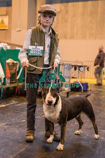 Handler with English Bull Terrier