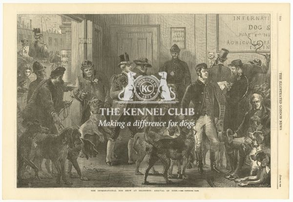 Illustration from the Illustrated London News (newspaper)   Dated June 10, 1865   'The International Dog Show at Islington; Arrival of dogs'   This illustration depicts early dog showing 8 years before Crufts dog show debuts at the same