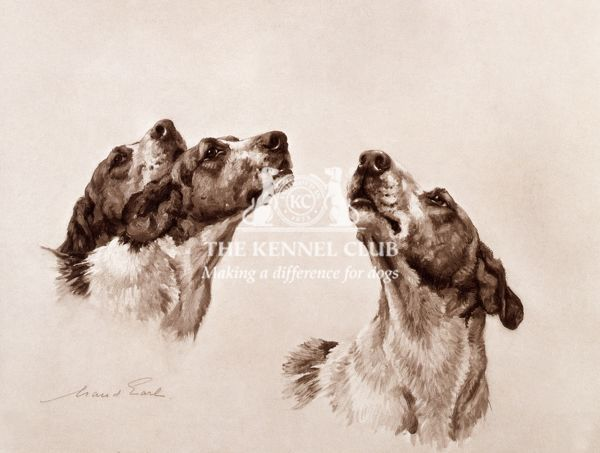 This photogravure has been taken from Maud Earl's portfolio 'British Hounds and Gun-Dogs', which was published in a limited edition of 500 copies in 1902 by the Berlin Photographic Company. The dogs shown here are Clumber Harriers called Lively
