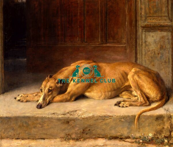 Signed with monogram and dated 1916 Oil on canvas 40 x 47 ins Sir R W Buchanan Jardine's Greyhound, Long Span, won the Waterloo Cup in 1907