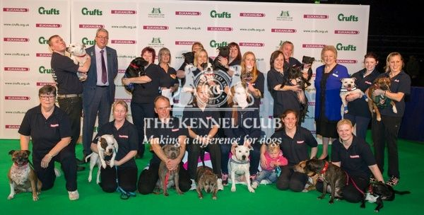 Photo Call The kennel Club handing over a cheque to the East Anglian Staffordshire Bull terrier Group