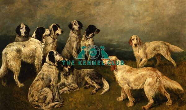 Signed and dated 1897 Oil on canvas 44 x 74 ins Sir Hunmphrey de Trafford helped establish Britain as a great nation of dog breeders. The English Setters shown are Ch Mallwyd Bess, Barton Maud, Ch Mallwyd Flo, Barton Rap, Ch Grouse of Kippen