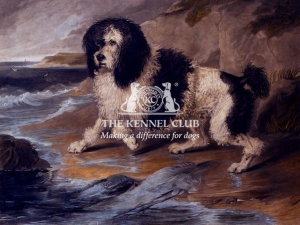 Hand coloured engraving 20 x 24 ins. Engraved by Robt. Mitchell 1852 and published by W.Schaws, New York, 1852 Landseer's original painting was completed in 1821 when he was 19 years old and the Poodle is a harlequin who belonged to Lady Williams