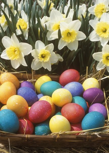 Colored Eggs in Basket, Easter Holiday