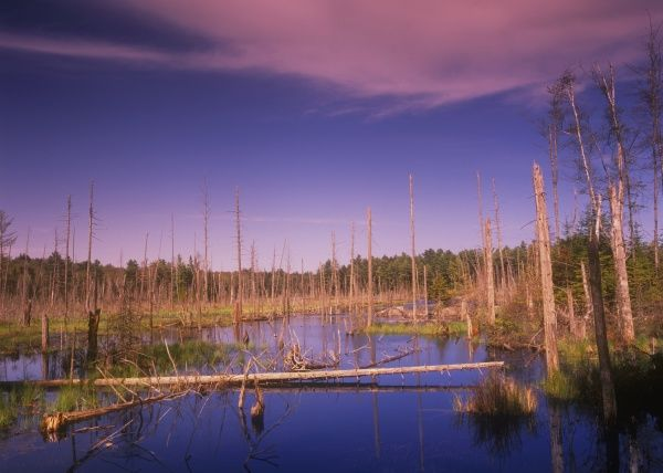 E. Pine Pond Outlet in Spring, Adirondacks, New York, Wetland