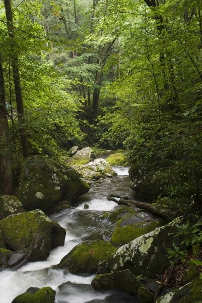 Roaring Fork, Roaring Fork Moter Trail Trail, Great Smokey Mountains National Park, TN