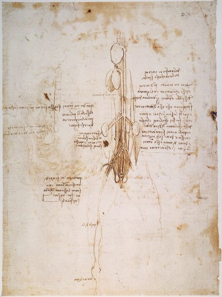 Pen and ink study, c1492, by Leonardo da Vinci of a horses anatomy ...