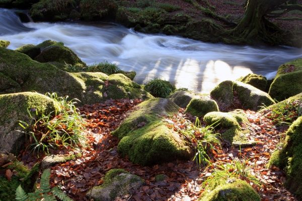 A winters day at the Golitha Falls on the Upper River Fowey near Liskeard Cornwall