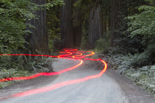 Car lights on a bumpy road, Jedediah Redwoods, California Coast, California, USA