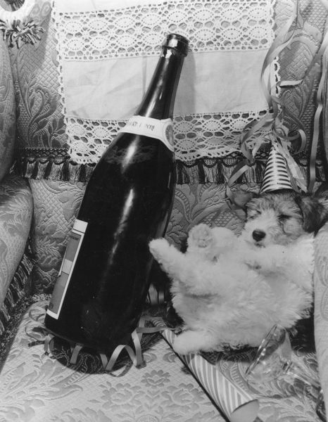 A dog wearing a party hat slumped in a corner next to a bottle of champagne. (Photo by Fox Photos/Getty Images)