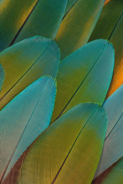 GREEN PARROT FEATHER DESIGN, ISSAQUAH, WA