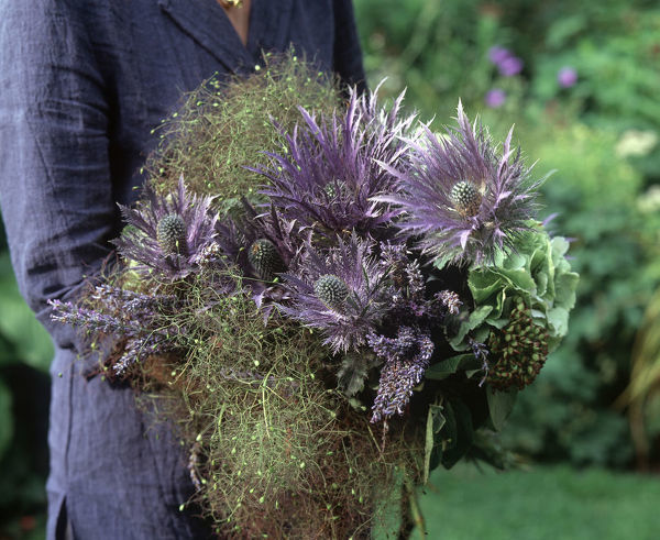 Bunch of purple flowers and foliage held by an unseen person, Lavender, thistle and Hydrangea. France