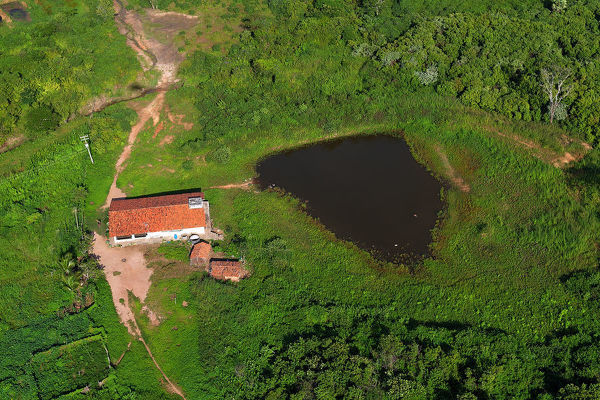 A fazenda or plantation that is generally coffee bushes. Ceara State, northeastern Brazil