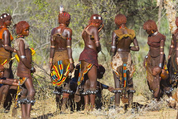 Traditional garments of goatskin with beading, and elaborate ornaments on Hamer women gathered for a ceremonial dance. One young woman?s back bears scars from ritual beatings in an initiation rite. Omo Valley, southwestern Ethiopia
