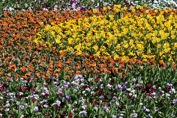 Flowers are seen during the official launch of Floriade 2015 in Canberra