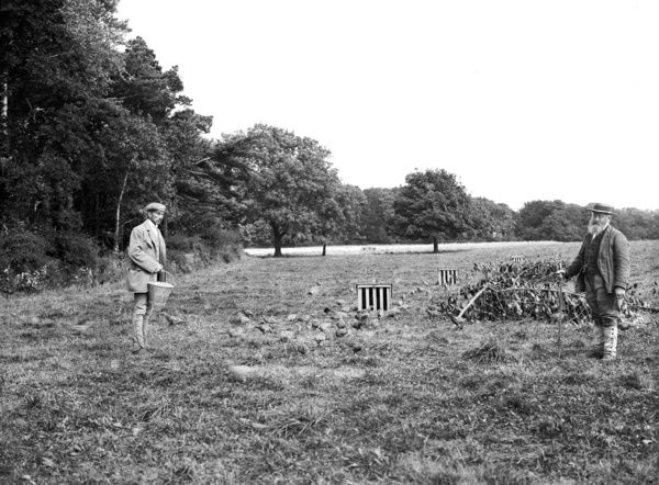 Gamekeepers feeding pheasants in a field