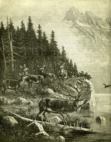 Hunt, Austria, Deer, 1891