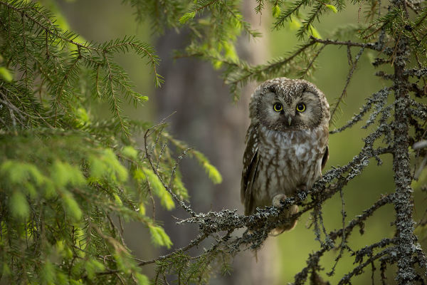 Image result for owl perched on a branch