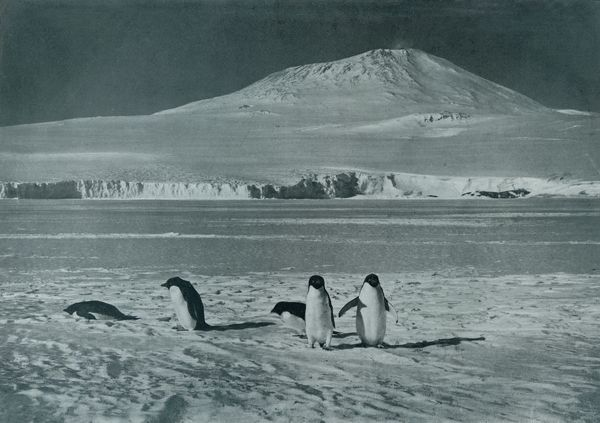 'Mount Erebus', c1911, (1913). Penguins at Mount Erebus, Ross island. Erebus is the second-highest volcano in Antarctica and the southernmost active volcano on Earth. The final expedition of British Antarctic explorer Captain Robert Falcon Scott