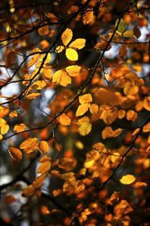 Autumn leaves N090378
