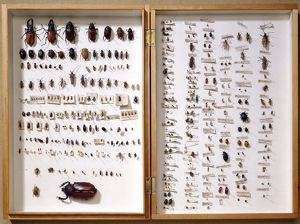 Beetle display case J970134