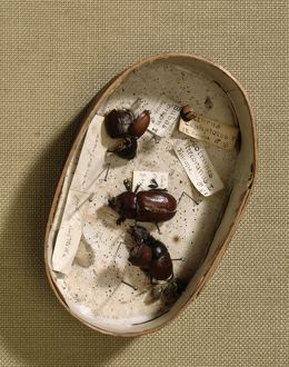 Box containing beetles J970133