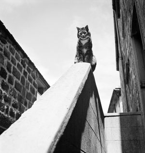 Cat perch AA086641