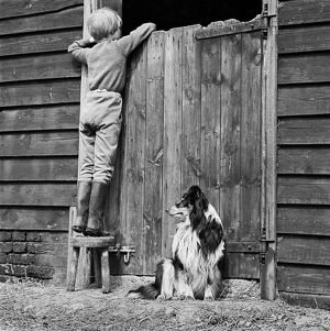 Child and dog AA075816