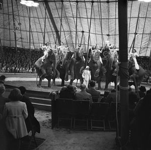 Circus elephants AA98_16300