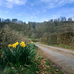 Exmoor country lane K020605