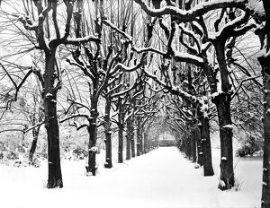 Lime Walk in the snow CC54_00329