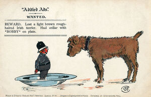 Addled Ads - Humorous postcard - Irish Terrier and 'Bobby'