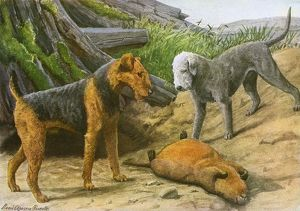 Airdale Terrier and Bedlington Terrier