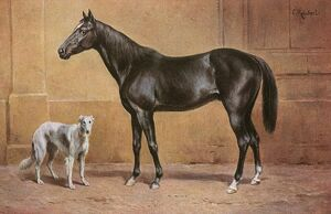Black Stallion and Borzoi Hound