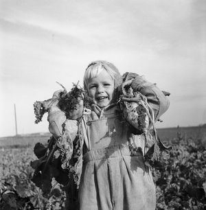 Boy with sugar beet