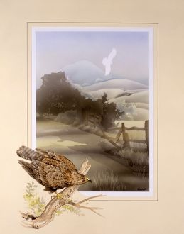 Buzzard and countryside landscape