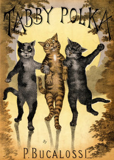 CATS DANCING A POLKA