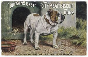 CITY MEAT DOG BISCUIT AD