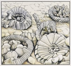 Coccoliths magnified a thousand times
