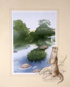 A countryside stream with an otter