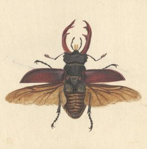 English Insects illustration by James Barbut
