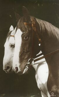 A fine portrait of two horses