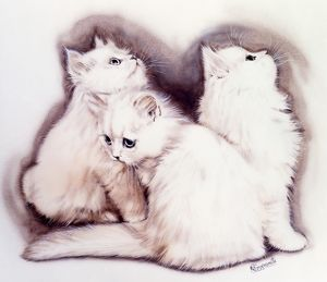 Three Fluffy white kittens