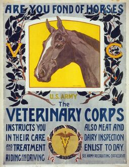 Are you fond of horses - US Army - The Veterinary Corps inst
