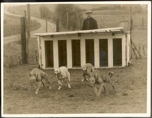GREYHOUND TRAINING