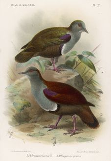 GROUND DOVES/BIRDS